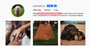Instagram profile attract visits grow followers