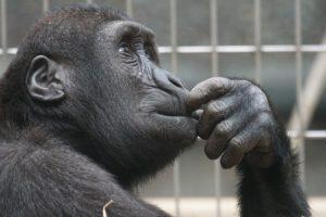 Primate thinking