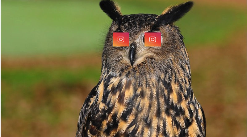 Can You See Who Looks at Your Instagram?