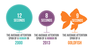 Attention span human gold fish