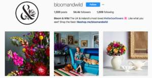 Bloom and wild Instagram