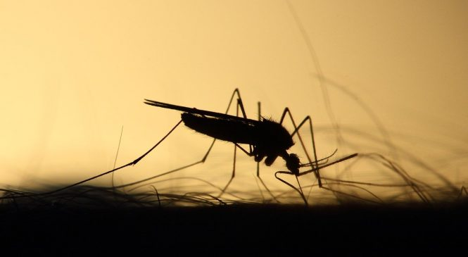 The Deadliest Animal on the Planet – The Mosquito