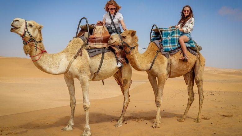 Enjoy Desert Safari With Camel Ride In Dubai 2021
